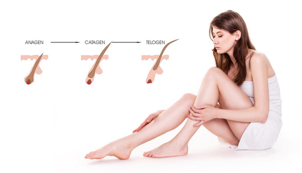 hårets tillväxtfaser, anagen, katagen, victus clinic, hudterapeut, skönhetssalong